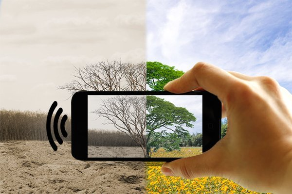 Environmental Impact of Wireless Devices: How EMF Radiation is Endangering the Planet